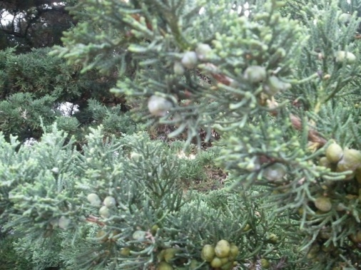 How to trim the top of a tree-tree-leaves.jpg