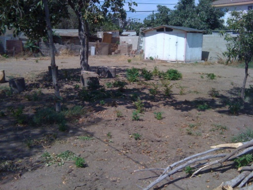 Need super heavy duty Plant poison.  Help.-tree-plague-1-.jpg