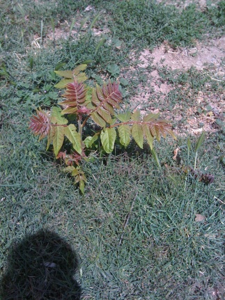 HELP!! How to keep this plants and tree seeds from growing back?-tree-seed-growing-0271.jpg