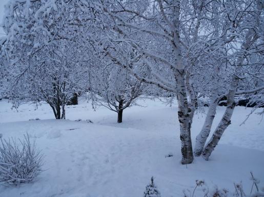 keep calm and build a snowman-trees.jpg