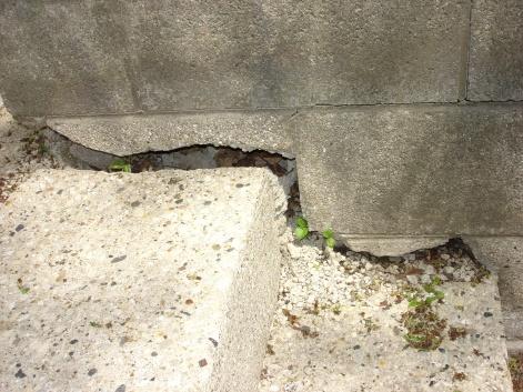 Patch cement block wall?-wall-20002.jpg