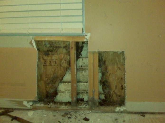 Leaking Window rotton plywood and studs-wall.jpg