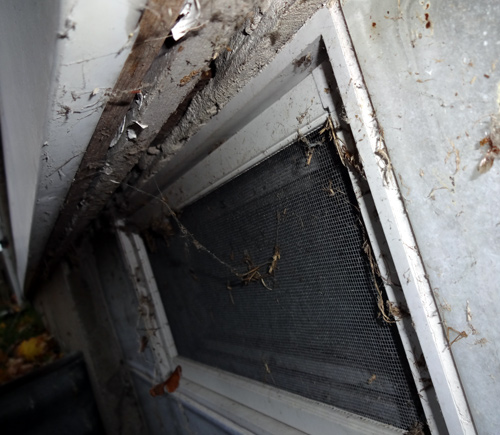 Walls open to outside above basement windows!-wallhole.jpg