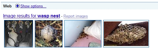 What kind of nest is this ?-wasp-net-google.jpg