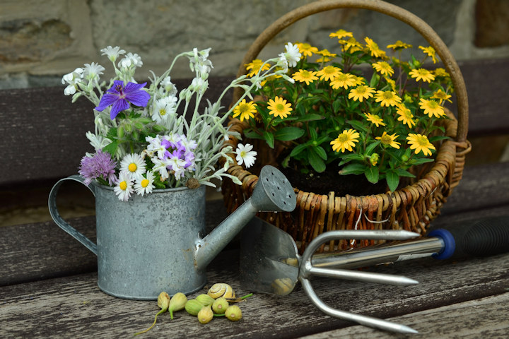 Is anyone doing any container gardening this year?-watering-can-lge.jpg