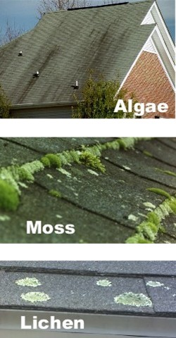 New Roof-web_roof_algae_moss_lichen_1.jpg