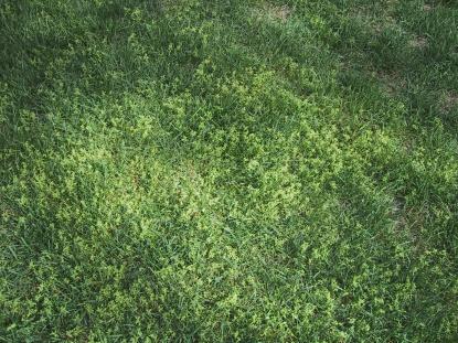 need help in identifying this weed-weed-1.jpg