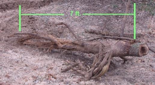 Stumped-wood-stump-pulled-3-6-10.jpg