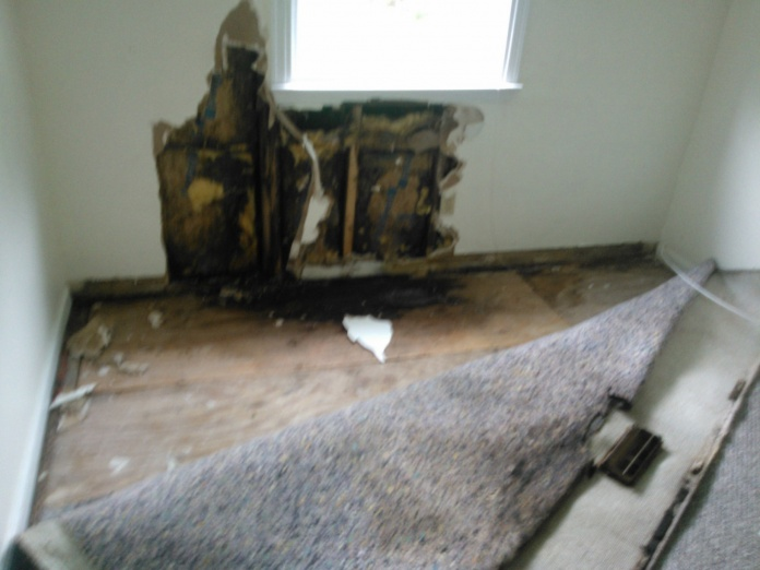 Attempting some minor mold remediation...NEED HELP-wp_000041.jpg