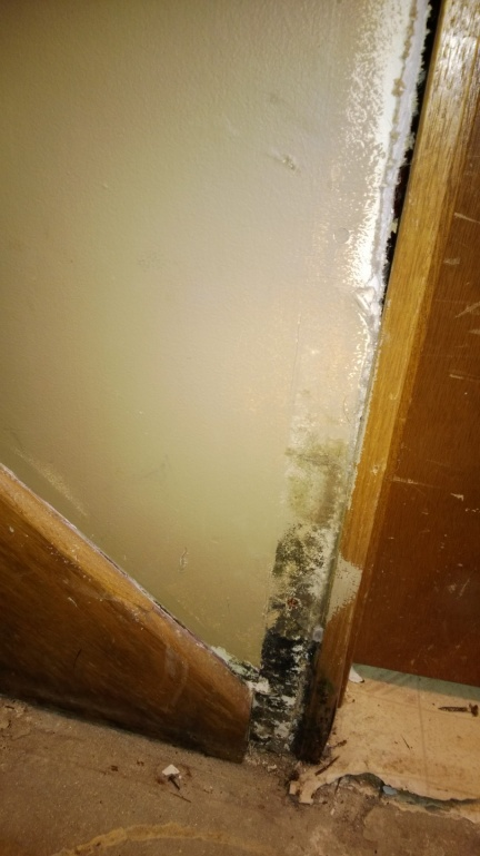 found some mold, I think-wp_20131220_006.jpg