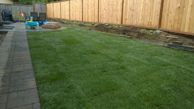Is this sod completely dead? Any hope?-wp_20140918_001.jpg