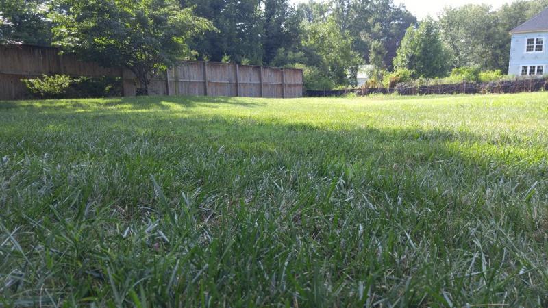 How should I flatten backyard lawn?-yard1.jpg