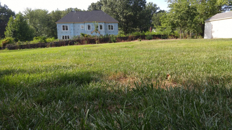 How should I flatten backyard lawn?-yard2.jpg