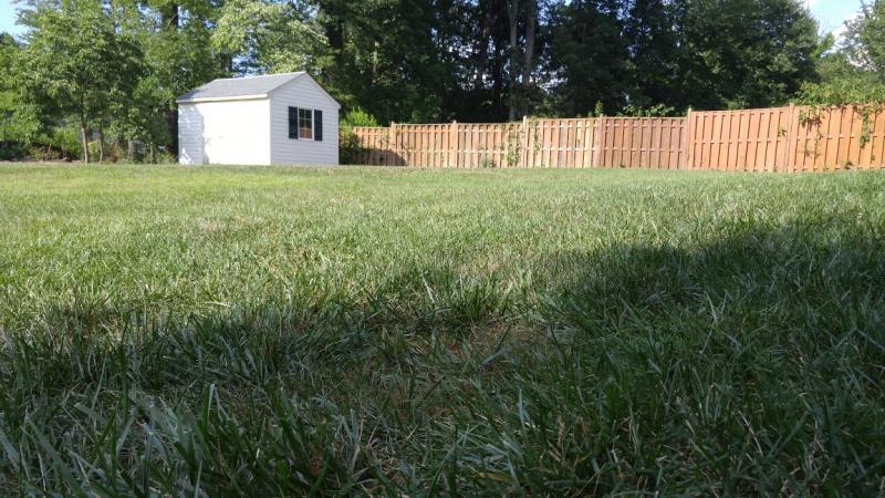 How should I flatten backyard lawn?-yard3.jpg