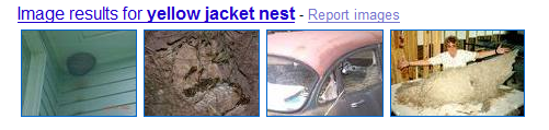 What kind of nest is this ?-yellow-jacket-nest.png