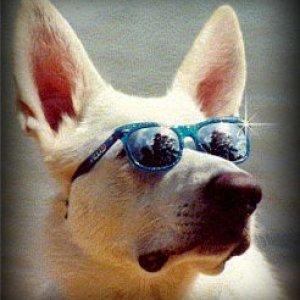 shades Thor