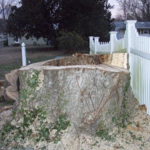aayard tree stump