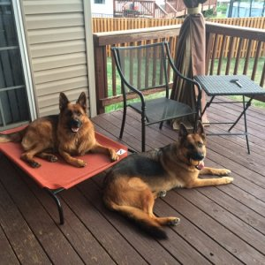 3-1/2 Years  Ulee in on the dog bed and Kona is on the deck.