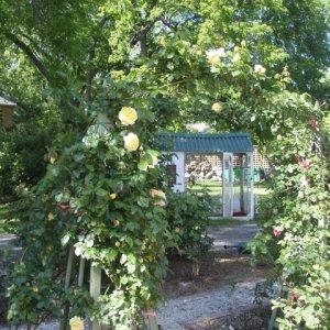 2011 Rose Garden 2