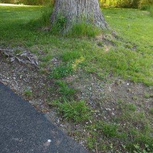 Driveway Edge 1