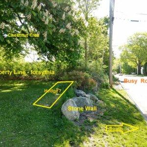 Stone Wall Hedge