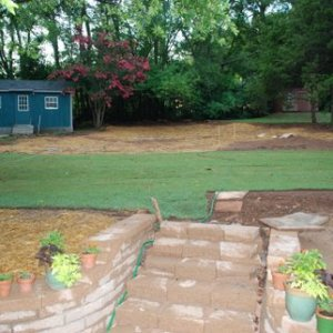 Another view of sodded back yard...still work to do.