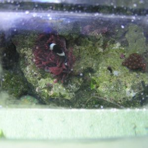 aquarium hat view