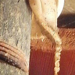 Pipe drain leak closeup