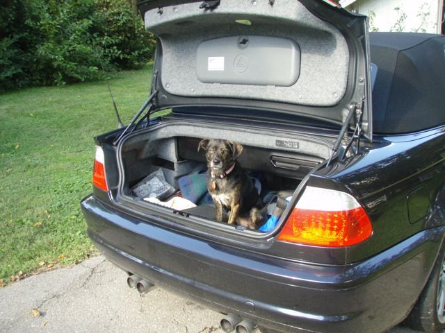 1 crackie in the trunk