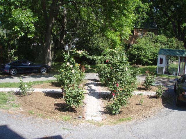 2011 rose Garden 3