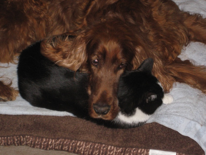 A picture of my beloved Irish Setter, Skee resting his head on Evil Jake the Cat.  I miss you, buddy.