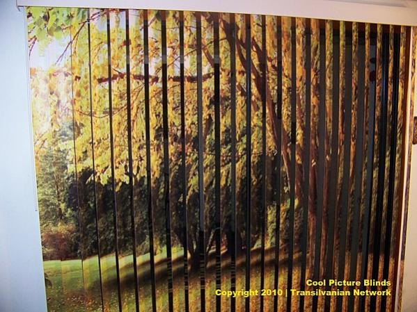 printed vertical blinds coolpictureblinds10